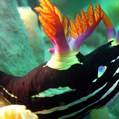 nudibranch-at-Hin-Wong-Pinnacle-Thailand